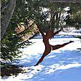 Winterdancer