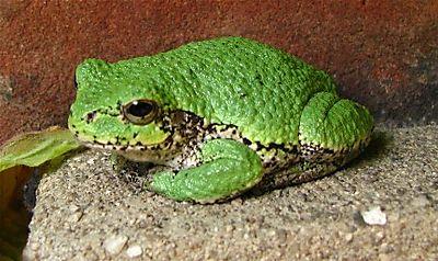 Frog IMG_1845