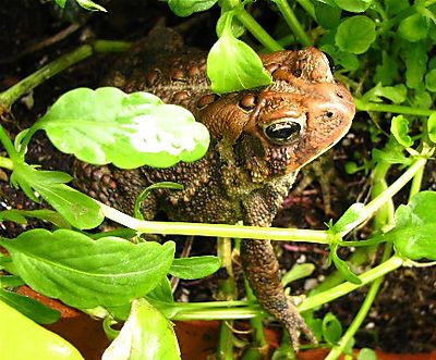 Toad IMG_1863