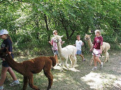 Alpaca walk 2 IMG_1893