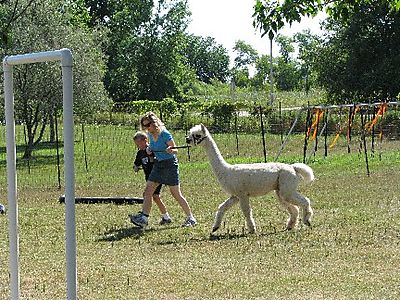 Obstacle course IMG_1881