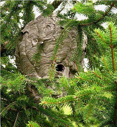 Bee hive IMG_1954
