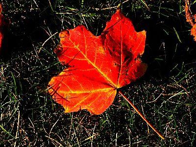 Fall leaf IMG_2057