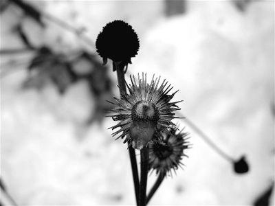 Winter flower IMG_2372